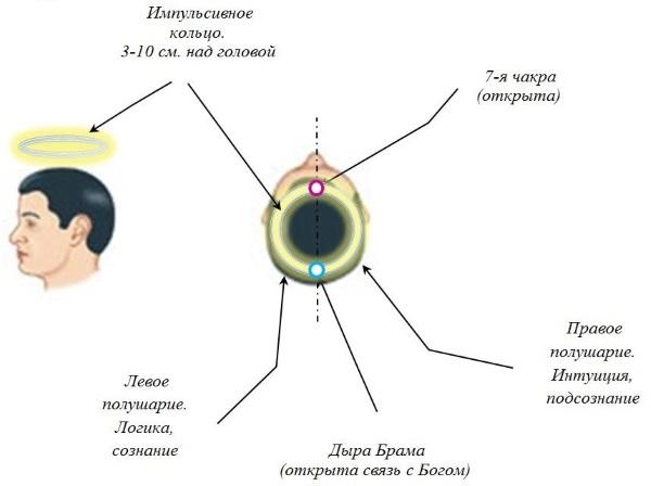Человек. Импульсивное Кольцо